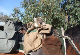 Snake Island - Koala riding horse